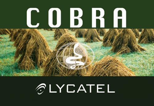 Cobra 6 euro